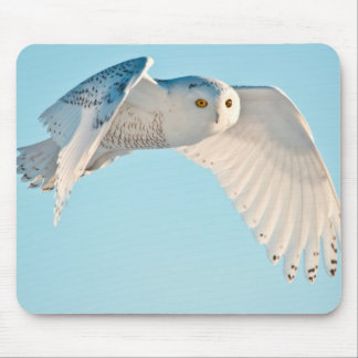 Snowy Owl in flight Mouse Pad