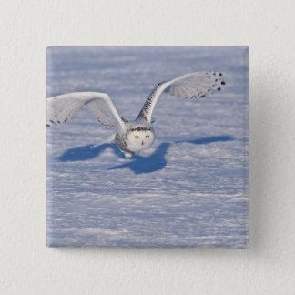 Snowy Owl in flight. Pinback Button