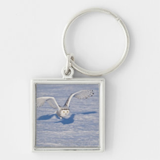Snowy Owl in flight. Silver-Colored Square Keychain