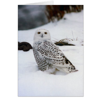 Snowy Owl in The Evening Shadows Card