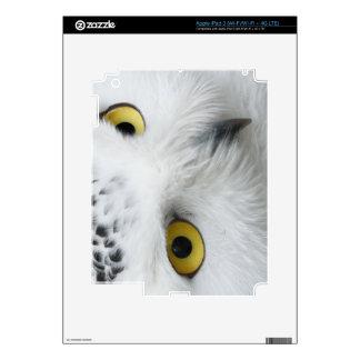 Snowy Owl iPad 3 Decal
