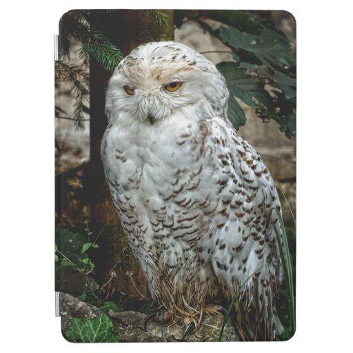 Snowy Owl iPad Air Cover