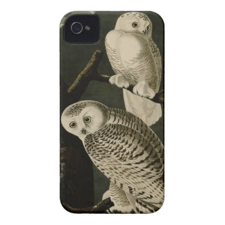 Snowy Owl iPhone 4 Case-Mate Cases