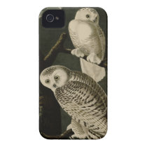 Snowy Owl iPhone 4 Cover