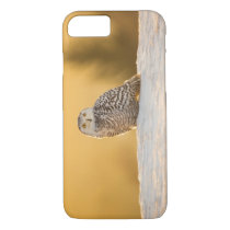 Snowy Owl iPhone 8/7 Case