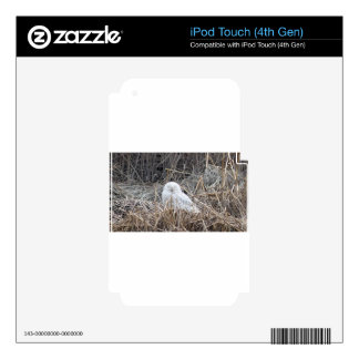 snowy owl iPod touch 4G decals