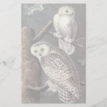 Snowy Owl, John Audubon