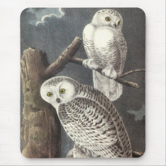 Snowy Owl, John Audubon Mouse Pad