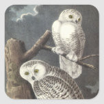 Snowy Owl, John Audubon Square Stickers