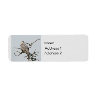 Snowy Owl Label