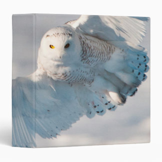 Snowy Owl landing on snow Binder