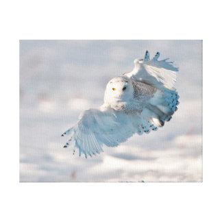 Snowy Owl landing on snow Canvas Prints