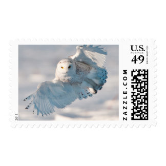 Snowy Owl landing on snow Postage