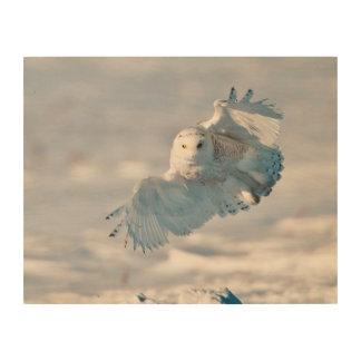 Snowy Owl landing on snow Wood Canvas