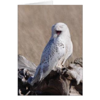 Snowy Owl Laughs! Card