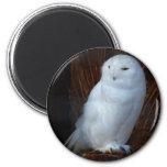 Snowy Owl Magnet