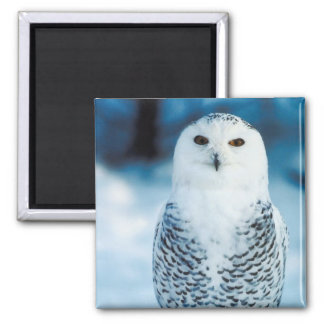 Snowy Owl 2 Inch Square Magnet