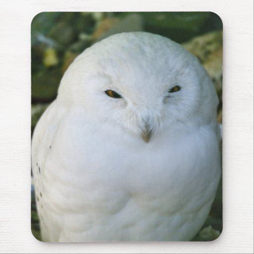 Snowy Owl Mouse Pads