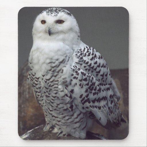 Snowy owl mousepad