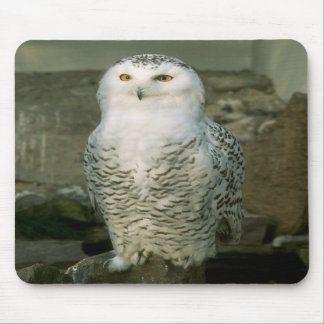 Snowy owl mouse pad