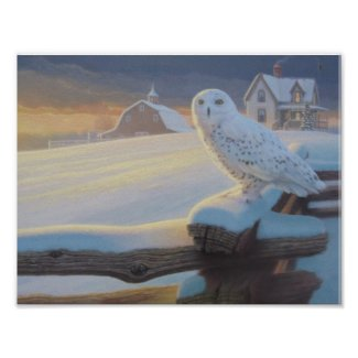 Snowy Owl on a Fence Poster