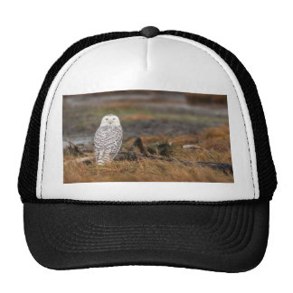 Snowy Owl on a log Trucker Hat