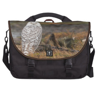 Snowy Owl on a log Bag For Laptop