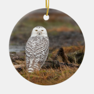 Snowy Owl on a log Double-Sided Ceramic Round Christmas Ornament
