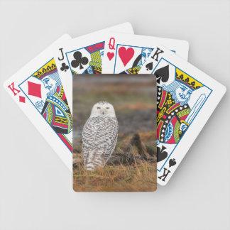 Snowy Owl on a log Poker Cards