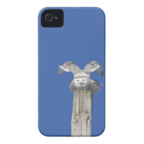 Snowy owl on top of a pole, preparing to take Case-Mate iPhone 4 case