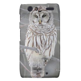 Snowy Owl  phone case Motorola Droid RAZR Case