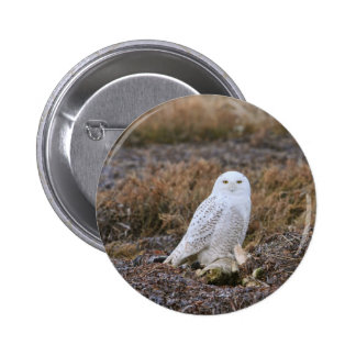 Snowy Owl Photo Pinback Buttons