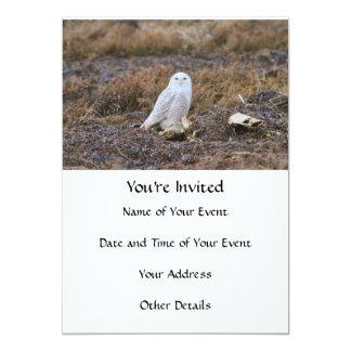 Snowy Owl Photo Card