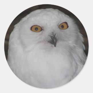 Snowy Owl Photo Classic Round Sticker