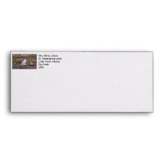 Snowy Owl Photo Envelope