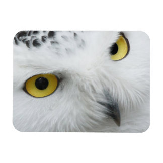 Snowy Owl Photo Flexible Magnet