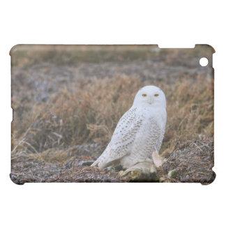 Snowy Owl Photo Case For The iPad Mini