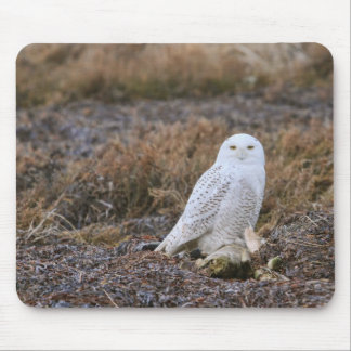 Snowy Owl Photo Mousepad