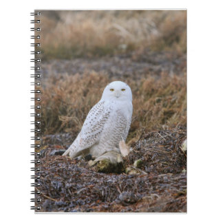 Snowy Owl Photo Notebook