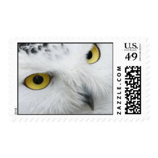 Snowy Owl Photo Postage Stamp