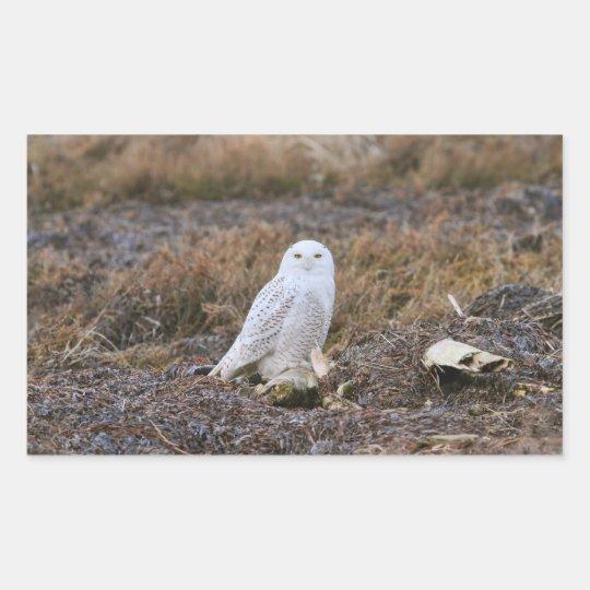 Snowy Owl Photo Rectangular Sticker