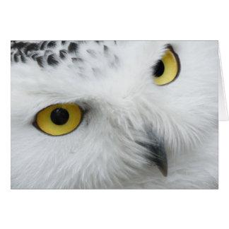 Snowy owl photograph card