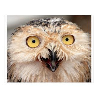 Snowy Owl Post Card