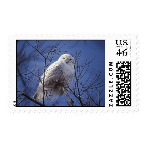 Snowy Owl Stamps