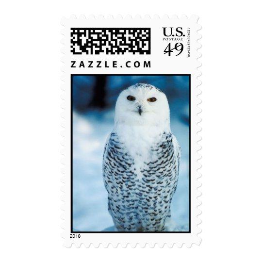 Snowy Owl Postage