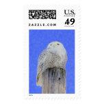 Snowy Owl Postage Stamp