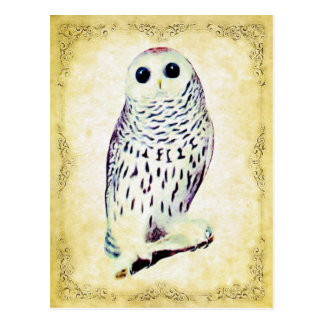 Snowy Owl Postcard