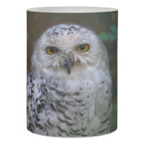 Snowy Owl Q, Schnee-Eule Flameless Candle