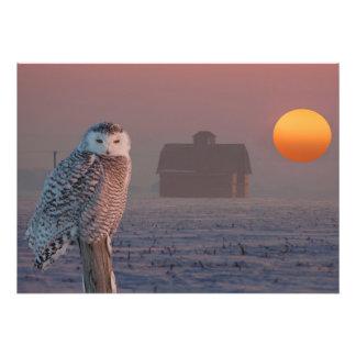 Snowy Owl scene Photo Art