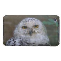 Snowy Owl, Schnee-Eule 002.2, iPod Case-Mate Case